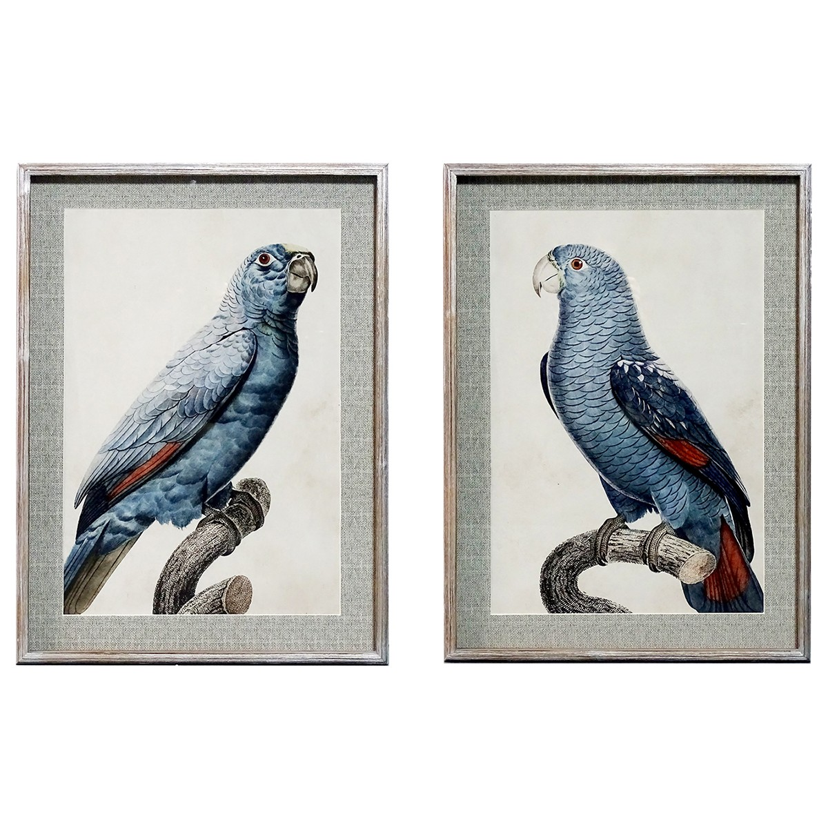 Welland 2 Piece Timber Framed Wall Art Print Set, King Parrot, 74cm