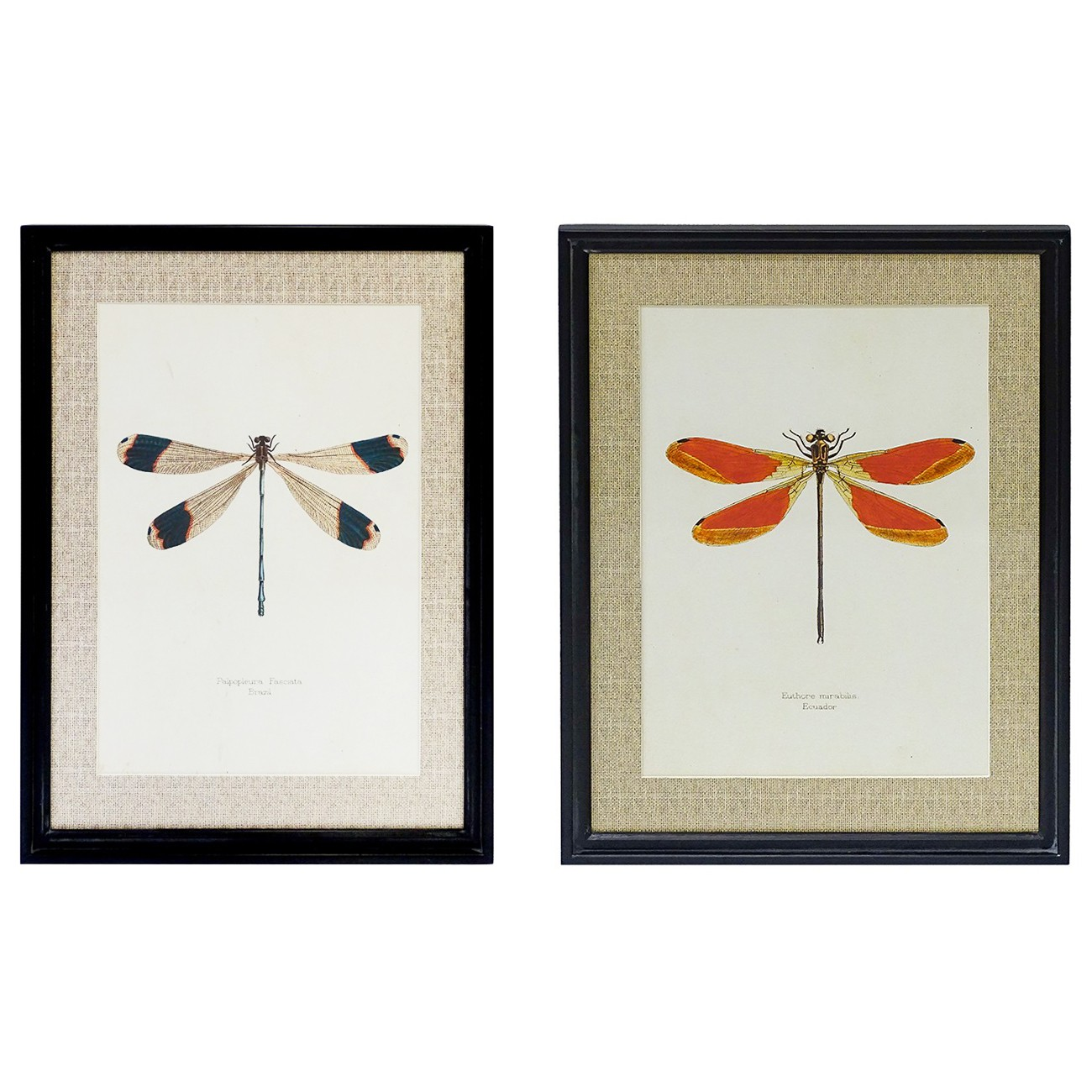 Orby 2 Piece Timber Framed Wall Art Print Set, Dragonflies, 70cm