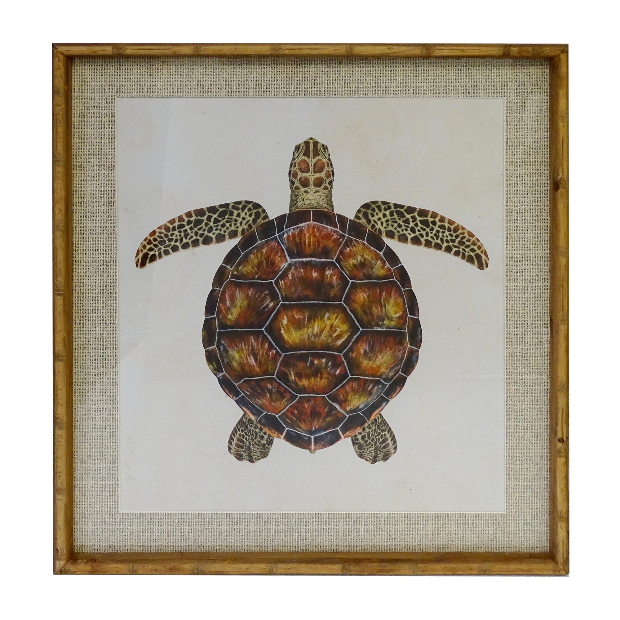 Chavez Bamboo Framed Wall Art Print, Reef Turtle, 70cm